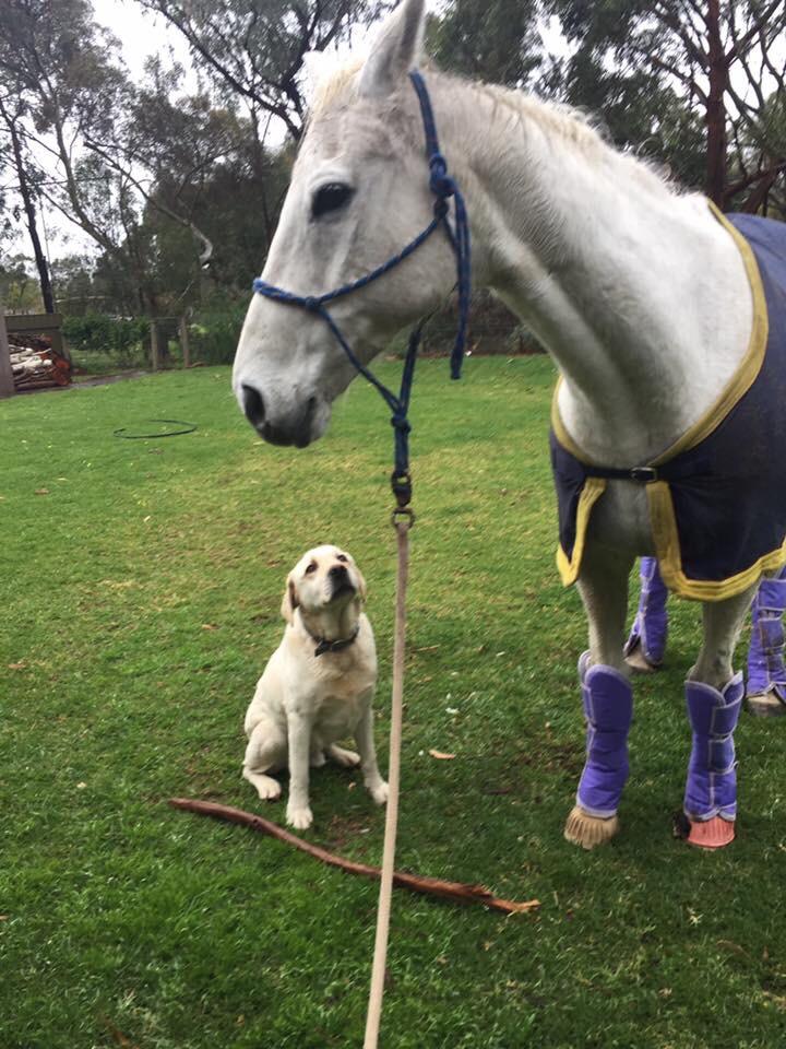 dog stick horse
