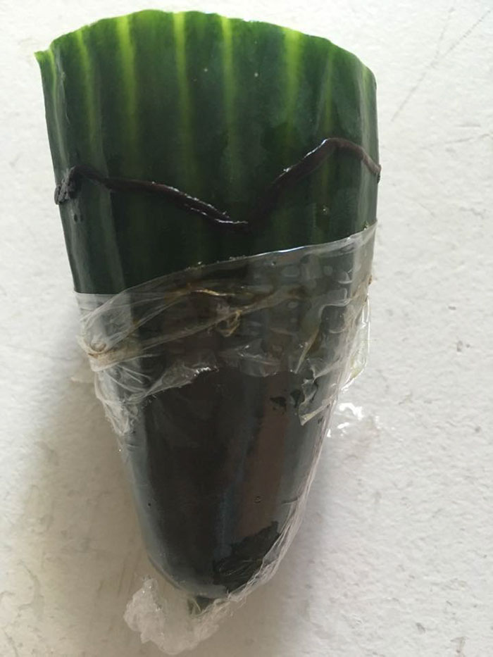 Tesco funny cucumber worm