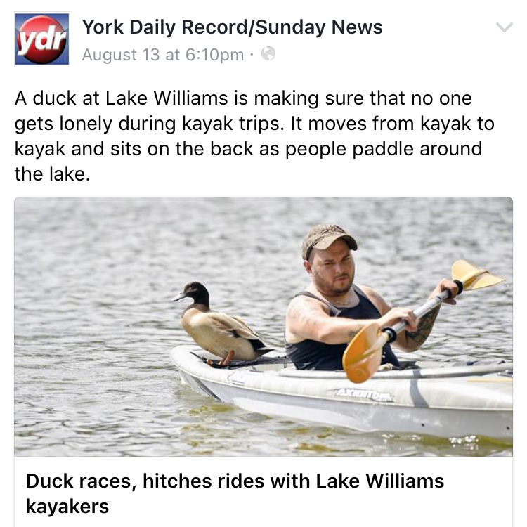 duck hops on rides with kayakers york lake