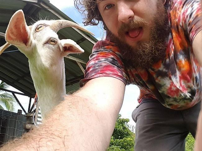 panorama moving goat