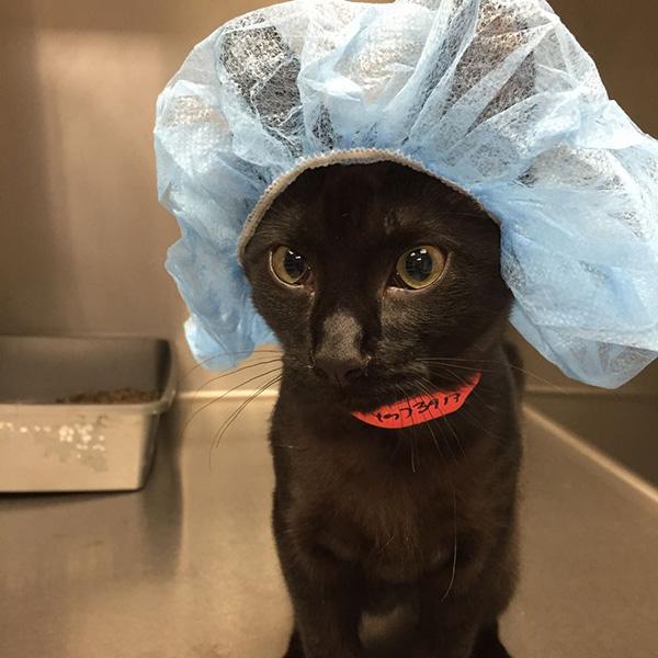 kitten doctor scrubs