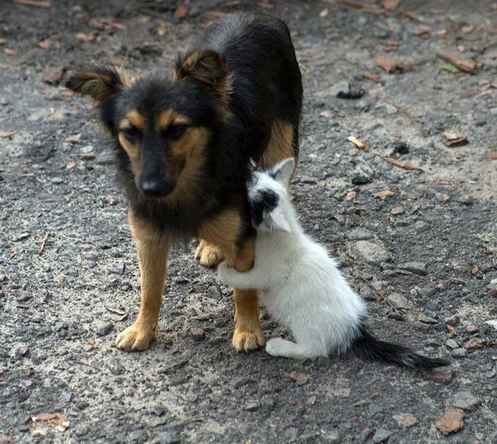 dog cat holding leg