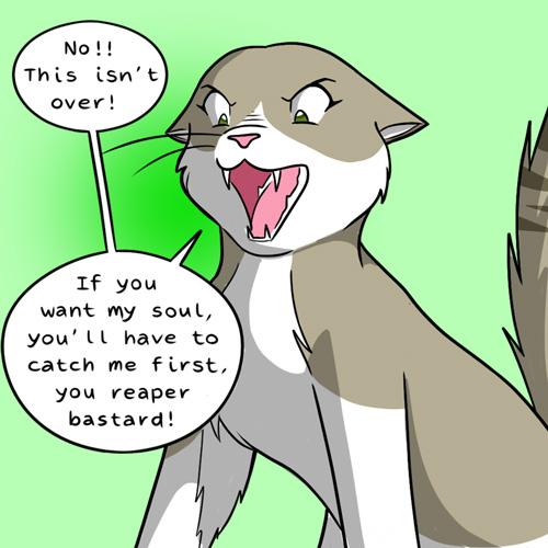 cat raccoon chair funny