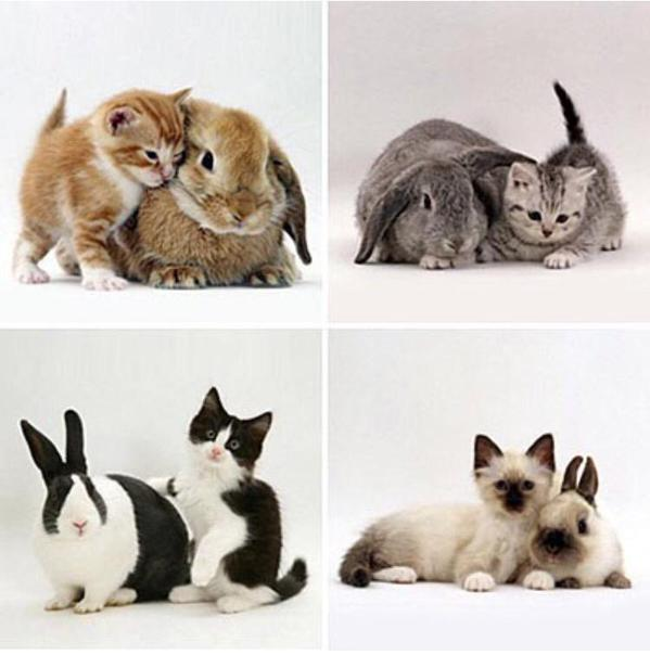 kittens and matching bunnies