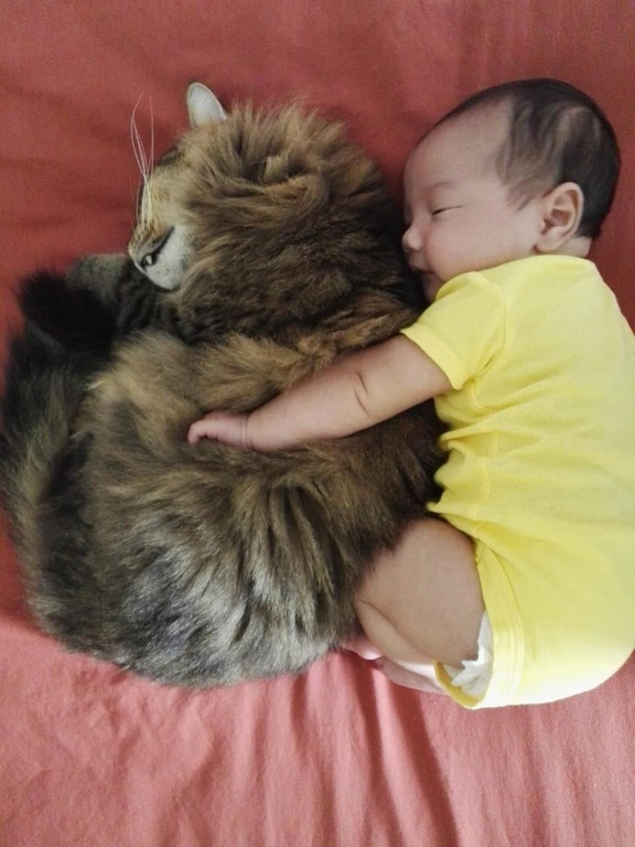 cat baby snuggling