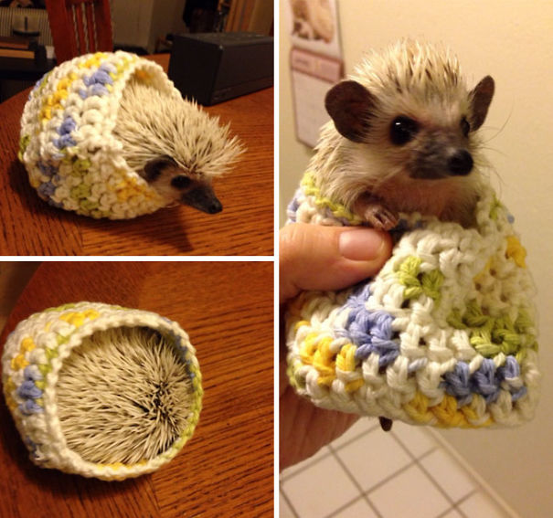 animals in sweaters