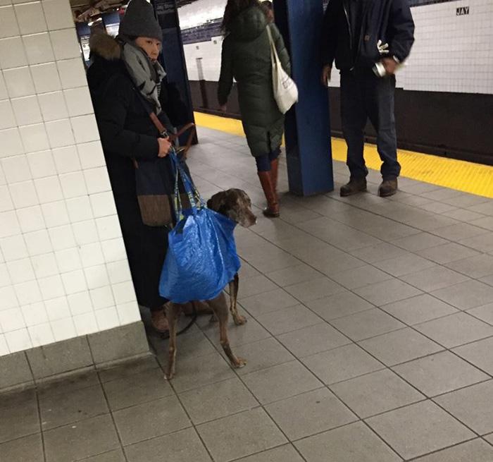dog bag subway funny