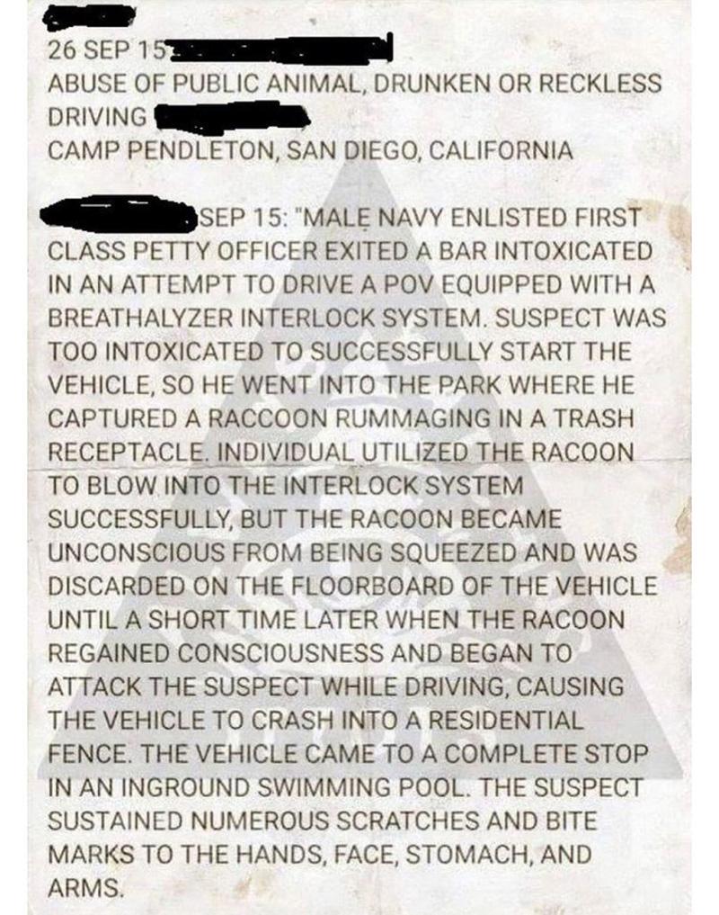 police report drunk navy guy raccoon