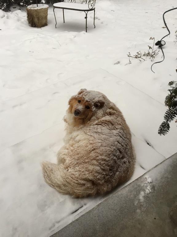 snow loaf
