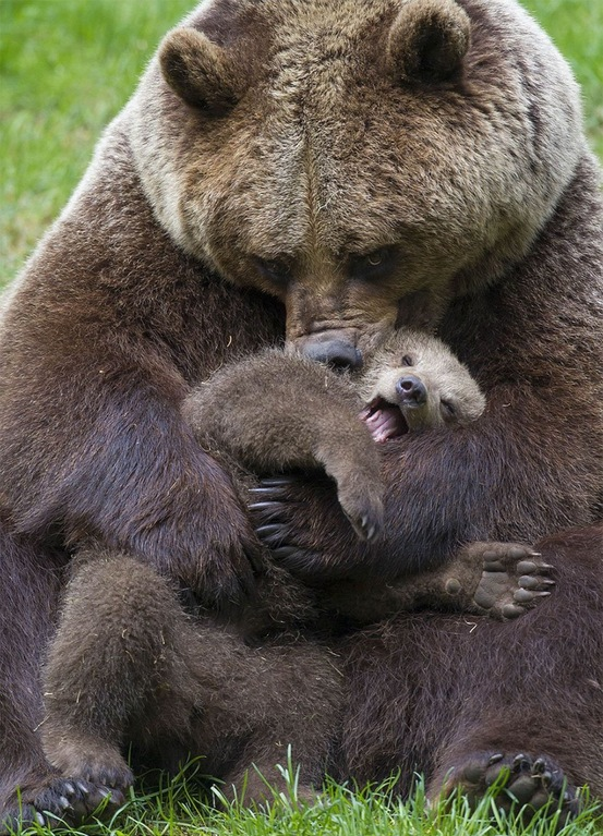 mama bear and her cub snuggling