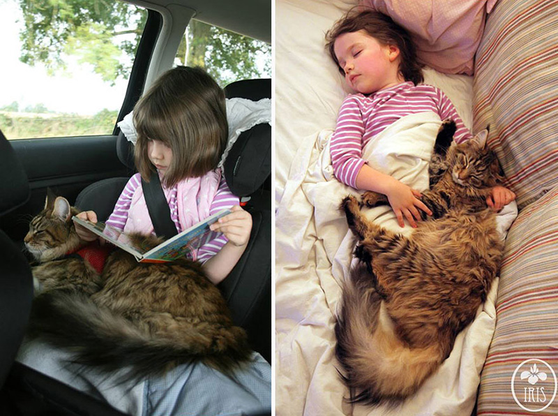 therapy cats