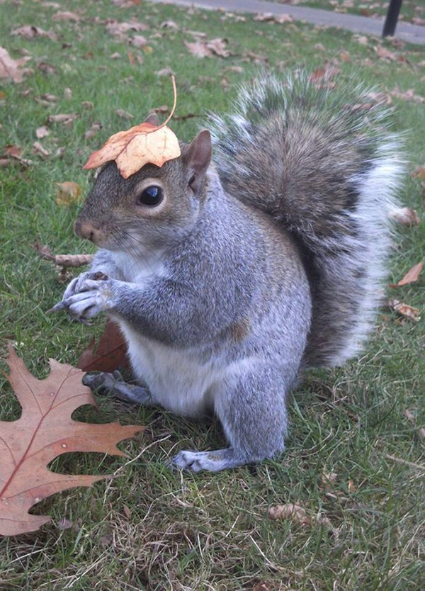 squirrel hat