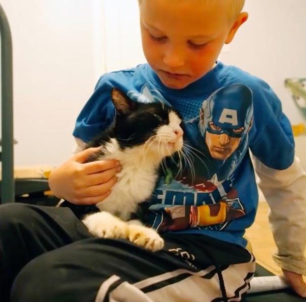amazing cat stories