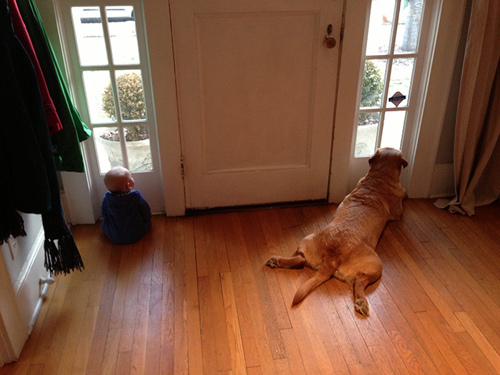 dog baby window