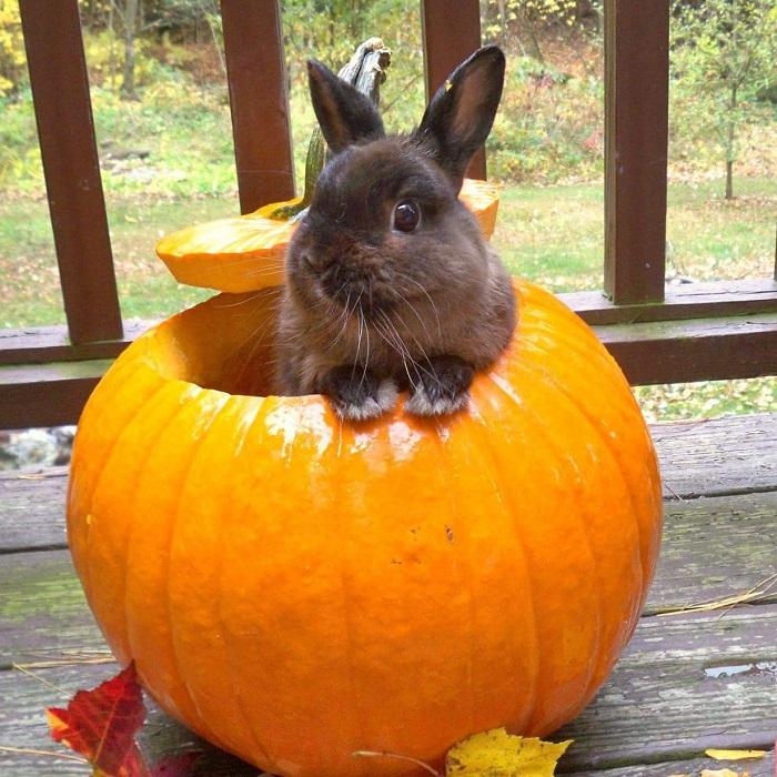 rabbit in pumpkin