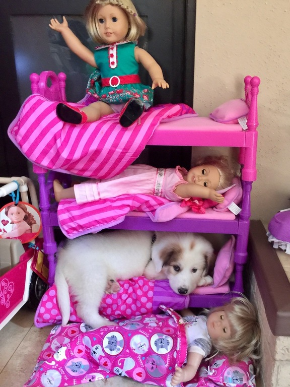 puppy sleeping in doll bed