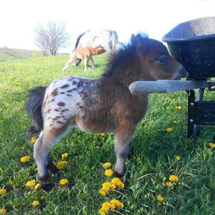 tiny horse cute