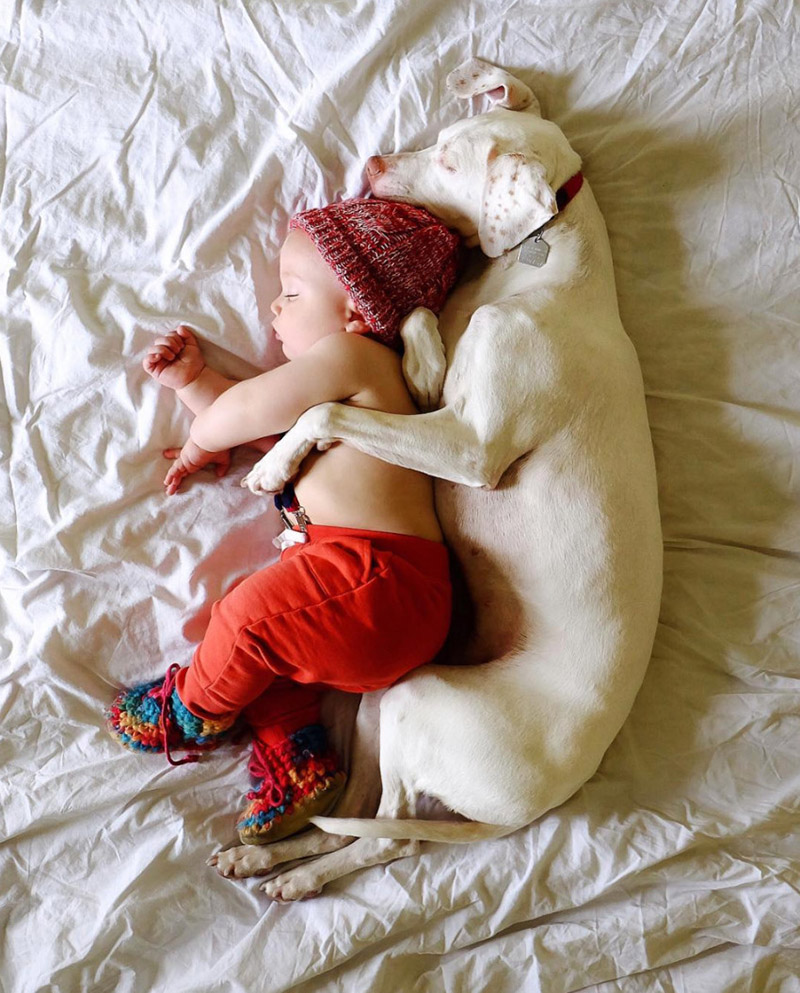 dog and baby photos