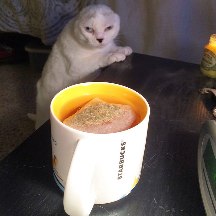deaf cat no ears rescued story