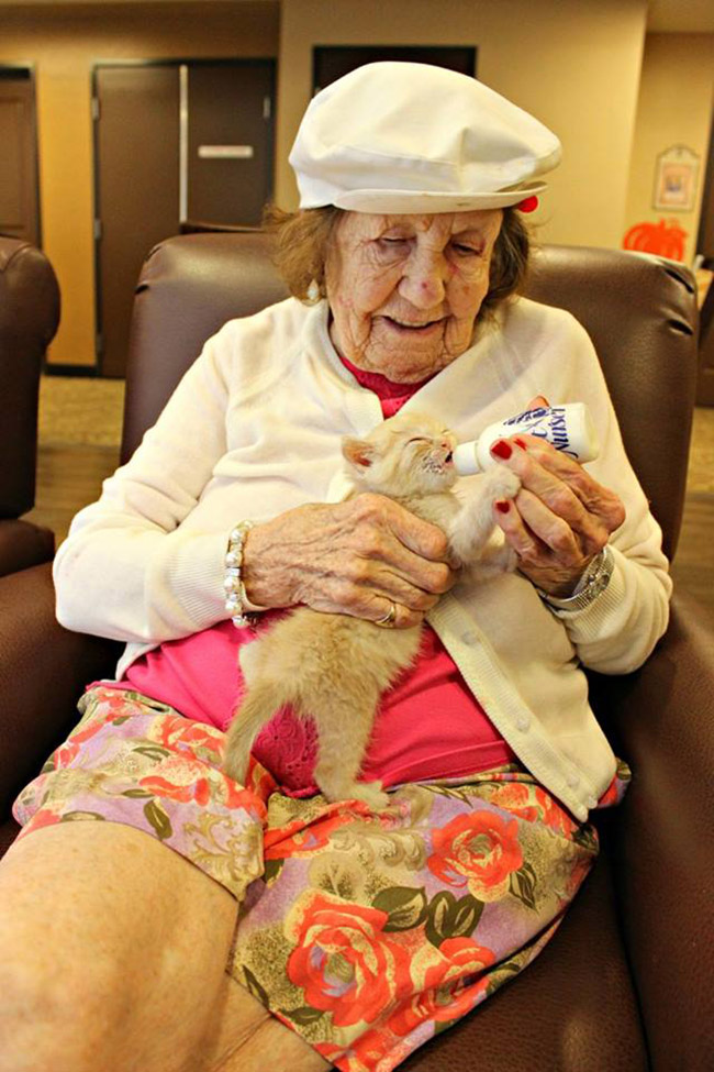 nursing home bottle feeds kittens