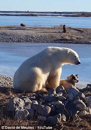 polar bear pets dog