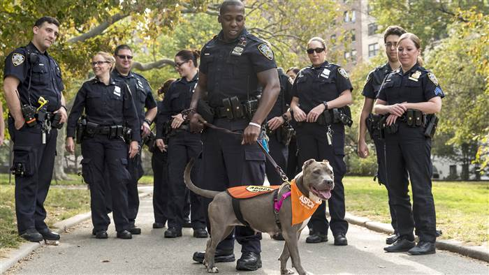 police rescue pit bull love good news dogs
