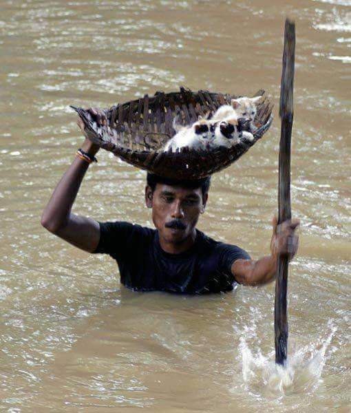 man saving kittens from flood