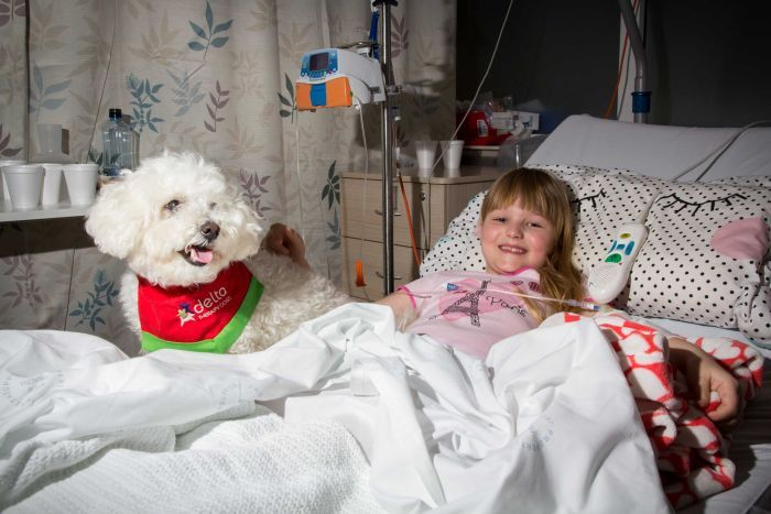 therapy dogs kids hospital help recovery time