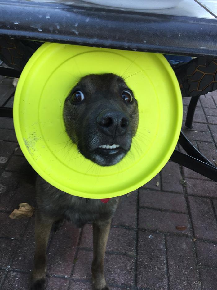 dog head in frisbee