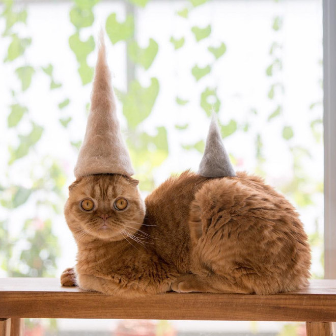 cats with hats of their own hair