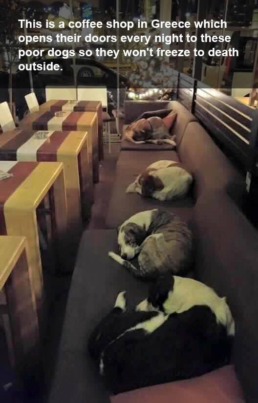 stray dogs sleep in coffee shop Greece