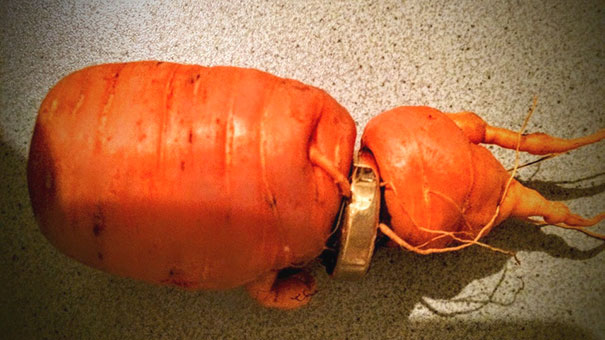 man finds lost wedding ring carrot