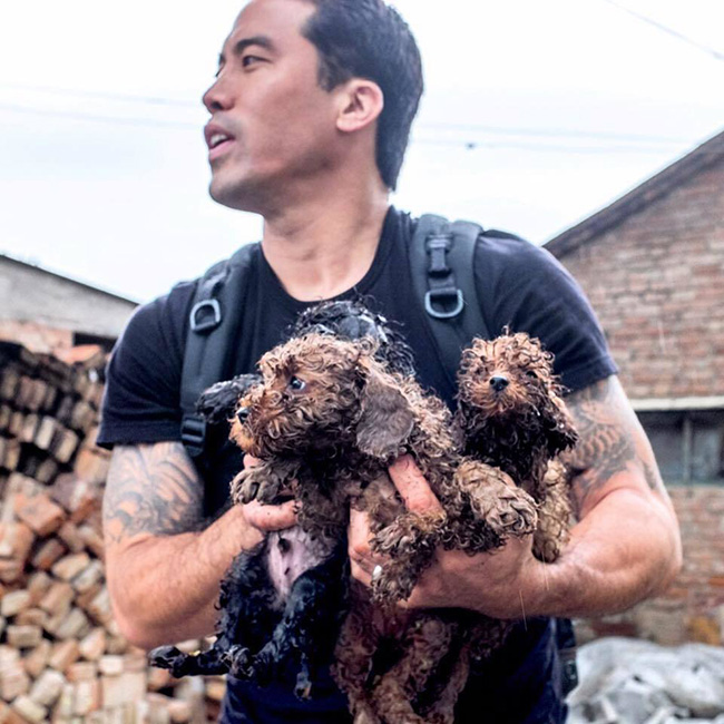 rescue dogs from Chinese dog meat festival
