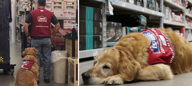 Lowes hires veteran and his service dog