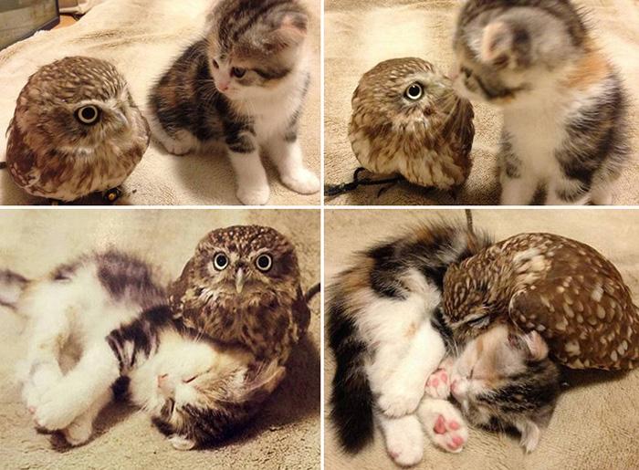 owl and kitten friends