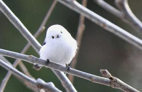 This Is The Korean Crow-Tit - The World's Cutest Bird!