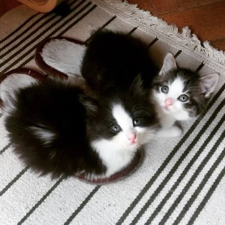 slipper warmers cats