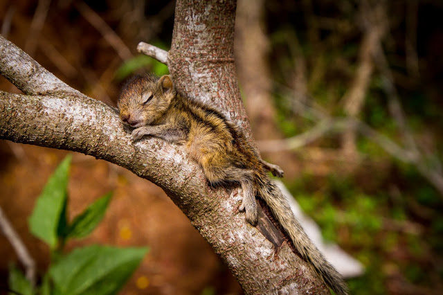 man rescues baby squirrel