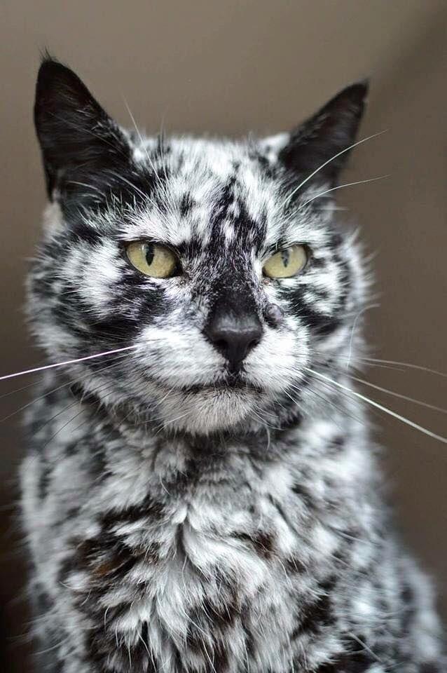 Scrappy Born A Black Cat