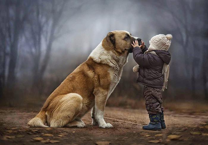 dog human elves