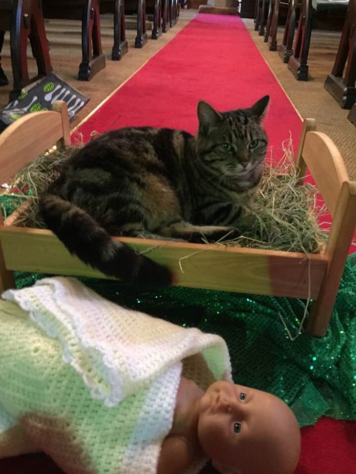 cat evicts baby jesus from manger