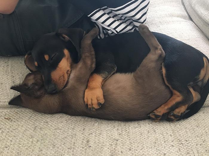 dogs sleep snuggling