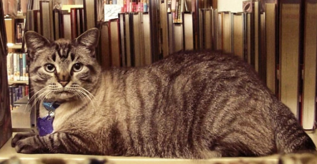 library cat outlasts councilman
