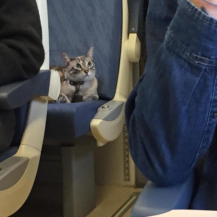 cat train ride
