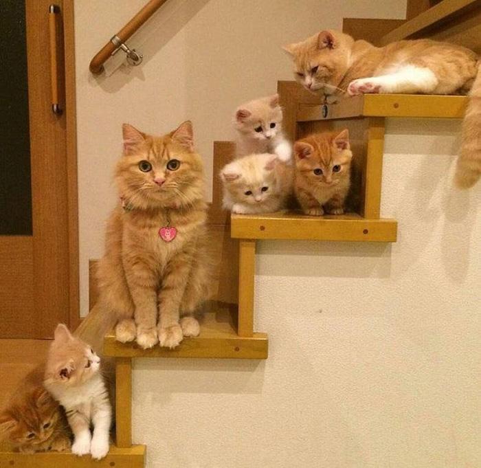 cat family on steps