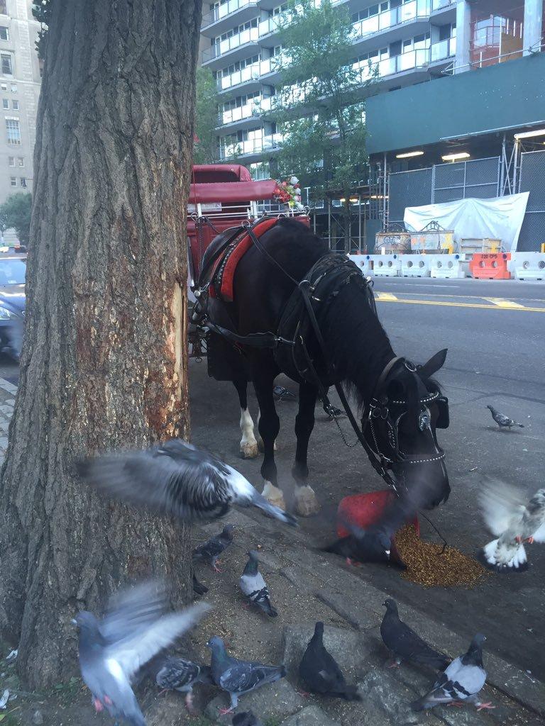 horse pigeons tweet
