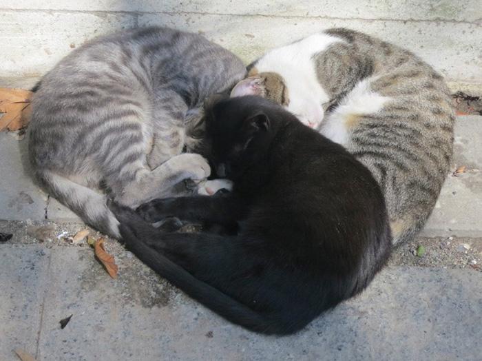 3 cats sleeping in a heart shape