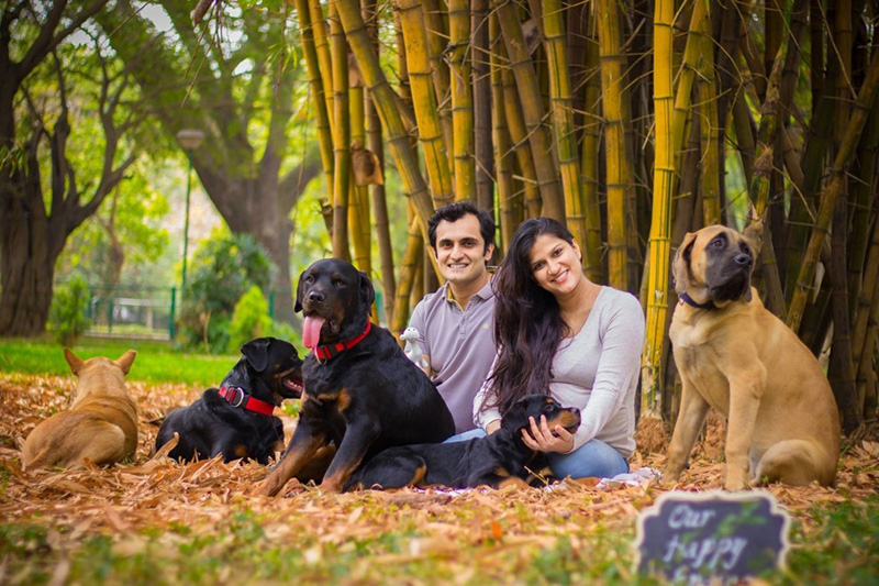 Indian couple maternity photos with dogs