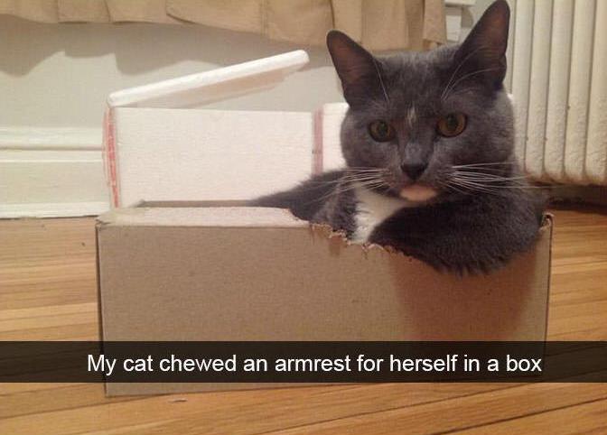 funny cat snapchats