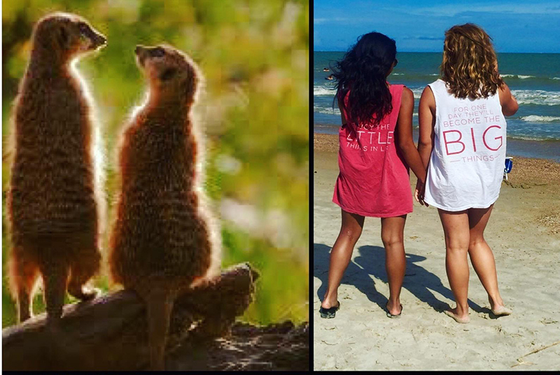 sorority sisters meerkats pose funny pictures